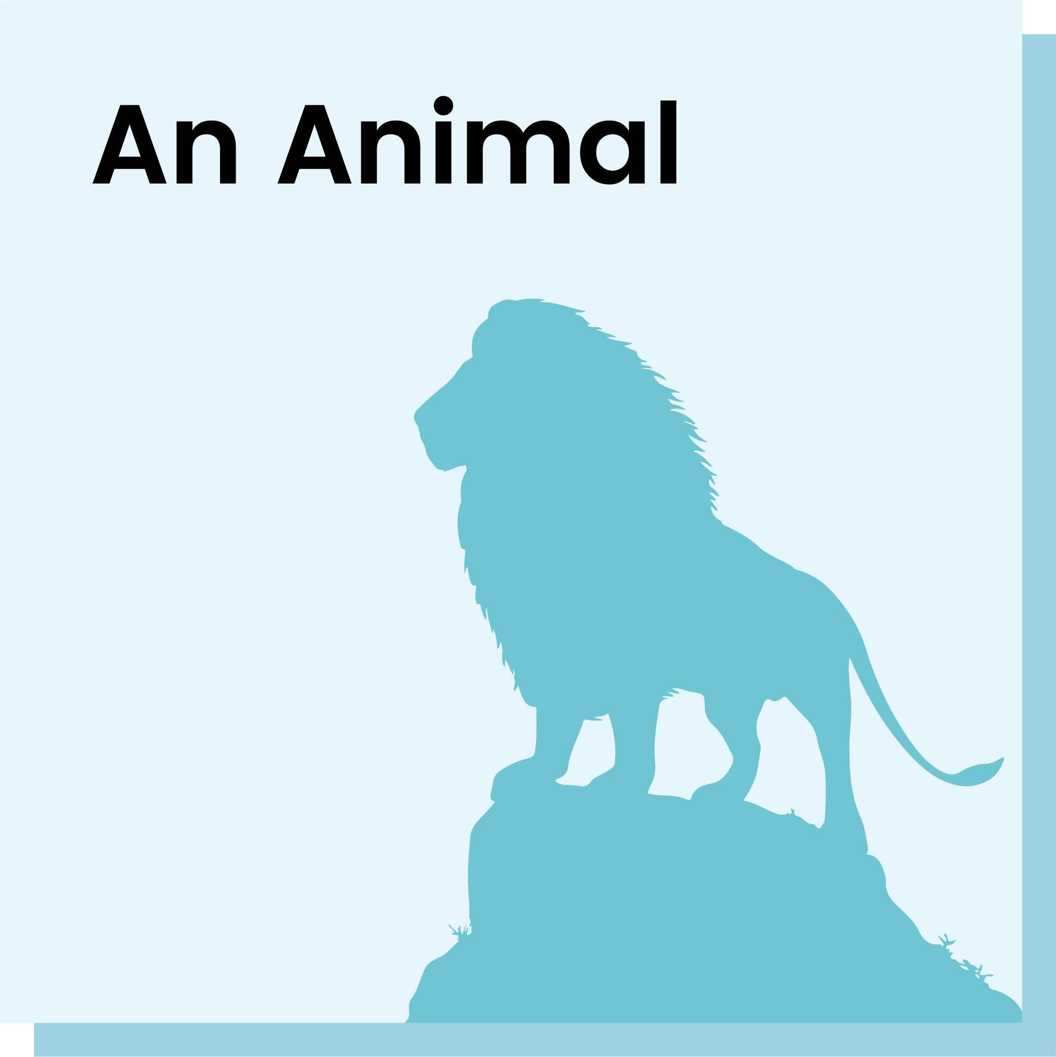 An Animal